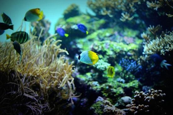 海底の写真